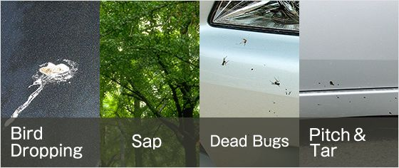 Bird Dropping, Sap, Dead Bugs, Pitch and Tar